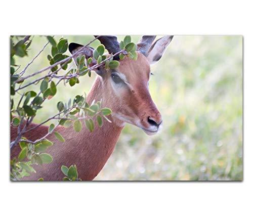 Acrylglasbilder 80x50cm Tier Waldtier Reh Ziege Acryl Bilder Acrylbild Acrylglas Wand Bild 14H2251