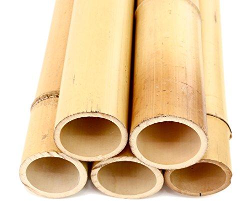 Moso - Caña de bambú (200 cm, con 10 a 12 cm de diámetro), color amarillo