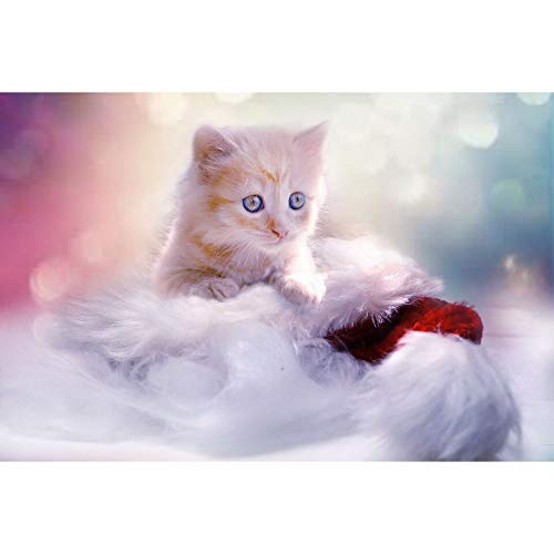 jiushice Rahmen Bilder Geschenk süße Katze Wandaufkleber s Acryl Schlafzimmer Dekor 60x90cm
