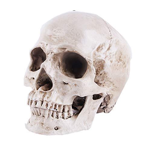 Menschliches Schädelmodell für Anatomie Lebensgröße 1: 1 Menschlicher Schädel Replikat Harz Medizinische Anatomische Verfolgung Lehren Skelett Statue Halloween Dekoration