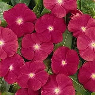 Outsidepride Periwinkle Rose - 2000 Seeds