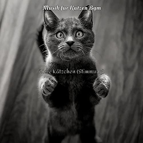 Stimmung - Fetzige Gestresste Katzen