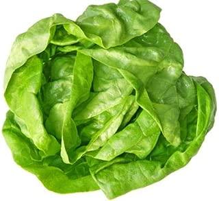 White Boston Lettuce Seeds - Heirloom Non GMO Non Hybrid Fresh 50 Seeds
