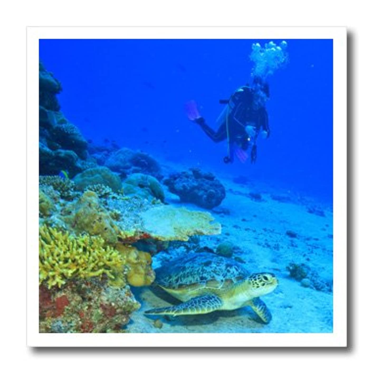 3dRose ht_74828_3 Scuba Diving, Green Sea Turtle, Southern Maldives-AS24 SWS0077-Stuart Westmorland-Iron On Heat Transfer, 10 by 10