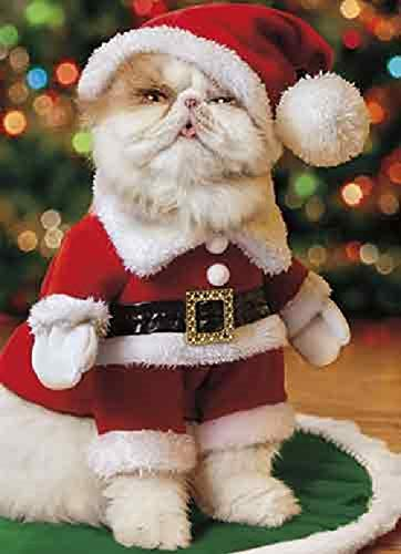 Avanti 10-Count Christmas Cards with Envelopes, I am Not A-mewsed