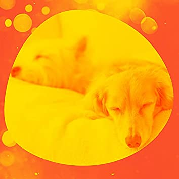 Trumpet Smooth Jazz - Ambiance for Well Behaved Dogs