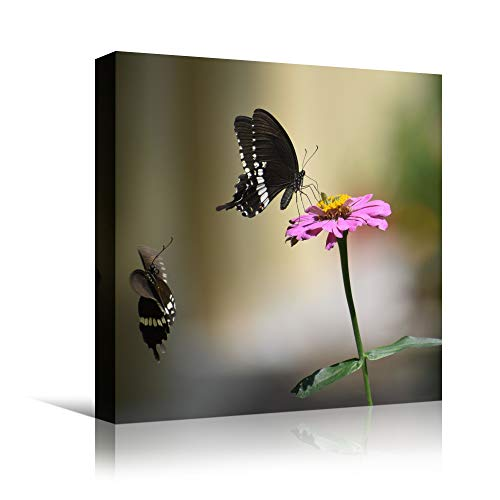 bestdeal depot Butterflies XIII Butterfly Colorful Farmhouse/Country Hallway Insects Multicolor Photography Wall Art Prints for Living Room,Bedroom Ready to Hang - 24x24 inches
