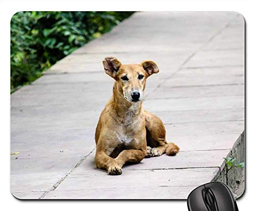 Gaming-Mauspads, Mäusematte, Streunender Hundeweg Tiernatur