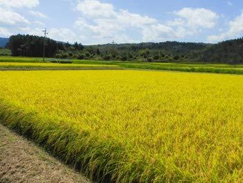 令和元年産JAS有機認定米農薬化学肥料不使用南魚沼産コシヒカリ5kg