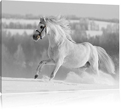 Wunderschönes weißes Pferd auf Schneewiese schwarz/weiß Format: 100x70 auf Leinwand, XXL riesige Bilder fertig gerahmt mit Keilrahmen, Kunstdruck auf Wandbild mit Rahmen, günstiger als Gemälde oder Ölbild, kein Poster oder Plakat