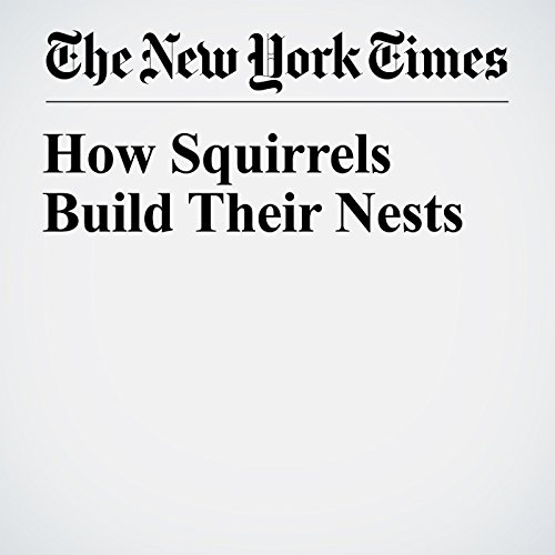 How Squirrels Build Their Nests copertina