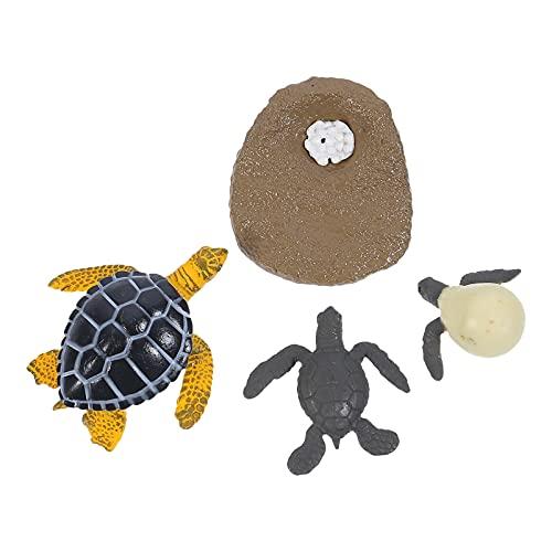 Angoily Estatuilla de Ciclo de Crecimiento de Tortuga de Mar Verde Modelo de Ciclo de Vida de Tortuga de Mar Verde Aprendizaje Juguetes Educativos de Ciencia Animal de Océano para Niños