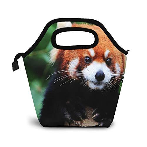 Bolsa Térmica Comida Bolsas De Almuerzo para Mujeres Hombres Niñas Niños Bolsa Isotérmica De Almuerzo Panda