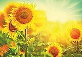 PICSonPAPER Hochwertiges Poster Sonnenblume, 100 cm breit x