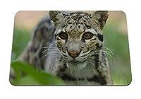 26cmx21cm マウスパッド (曇ったヒョウの顔が登山を発見) パターンカスタムの マウスパッド