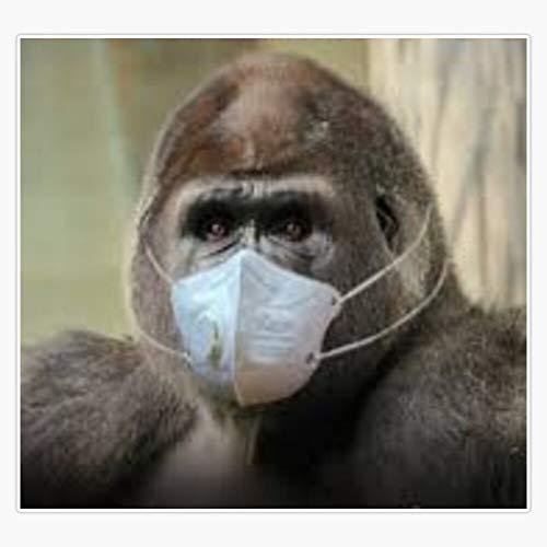 Coronavirus mask animal meme humor animal virus covid 19 Decal Vinyl Bumper Sticker 5'