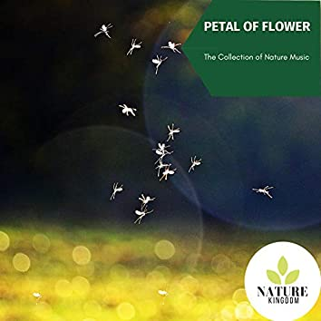 Petal of Flower - The Collection of Nature Music