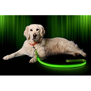 Illumiseen LED Dog Leash - USB Rechargeable - Your Dog Will Be More Visible & Safe - 6 Colors (Red, Blue, Green, Pink, Orange & Yellow) - Perfect to Use with Our Matching Collar (6 Feet, Green)