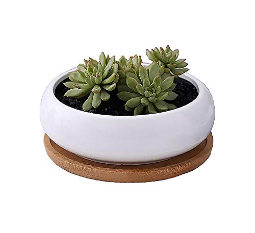 CherryTreeHouse Indoor Oblique Planter, Succulent, Cactus, Herb or Aloe Plant Pot, Bamboo Tray/Saucer, Decorative Display for Home, Office, Table | Birthday Gift/Present