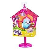 Little Live Pets S10 Lil Bird and House - Más de 20 Cantos de pájaros, Repite lo Que Dices - los Estilos Pueden Variar