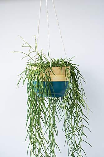 Ivyline BHPT18 Pot, Bambou, Bleu Sarcelle, 18 cm