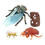 F Fityle Insect Cicada Lore Ladybug Life Cycle - 4 Pcs Insect Figure Shows Life of Lady Bug