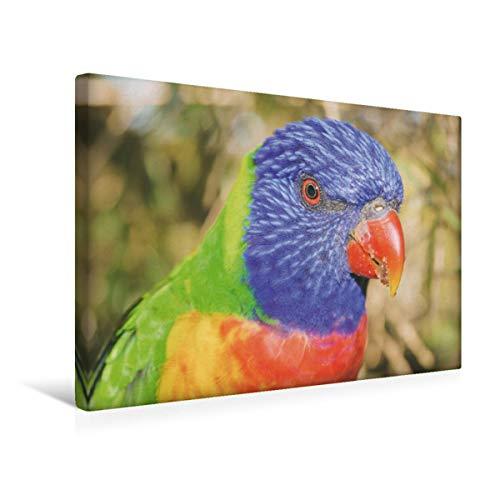 Lori arcoíris, 45x30 cm