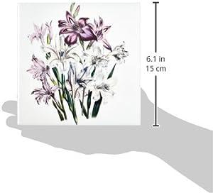 3dRose ct_149636_2 Vintage Flowers Gladiolusin White Pink and Lavender Ceramic Tile, 6-Inch