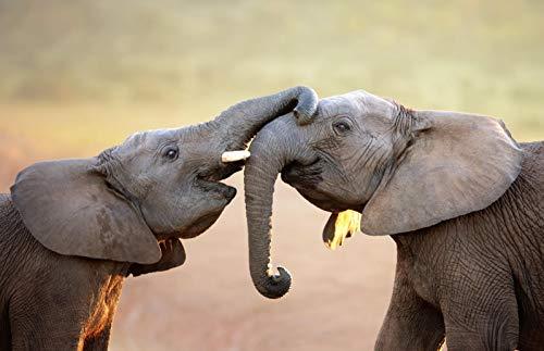 Rompecabezas Adultos 1000 Piezas,Puzzle Rompecabezas para Niños, Juguete De Regalo Ideal, La Mejor Decoración para El Hogar De Bricolaje Jugando elefante