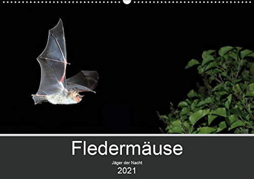 Fledermäuse - Jäger der Nacht (Wandkalender 2021 DIN A2 quer)