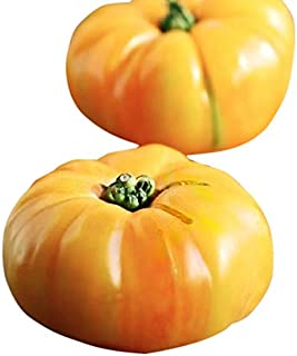 Organic Yellow Brandywine Heirloom Tomato Seeds - Large Tomato - One of The Most Delicious Tomatoes for Home Growing, Non GMO - Neonicotinoid-Free.