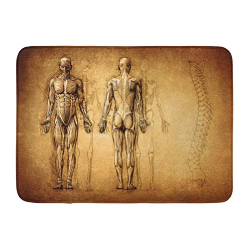 Soefipok Fußmatten Bad Teppiche Outdoor/Indoor Fußmatte Muskel Menschliche Anatomie Zeichnung Alte Leinwand 3D Körper Radiologie Schmerzen Badezimmer Dekor Teppich Badematte