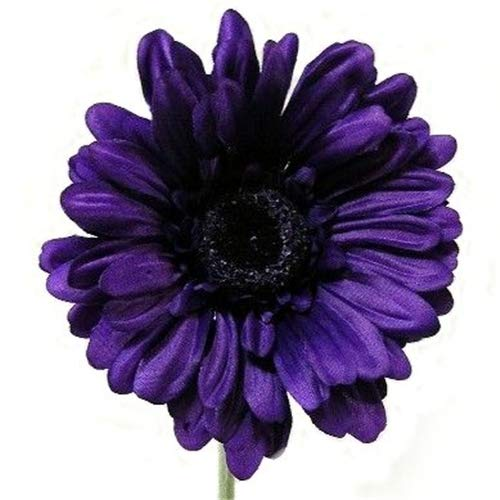 A1-Homes 6 x Artificial Single Stem Purple Gerbera with Big Bloom - Very Dramatic - Home Garden