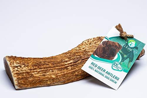 Dilecti Hirschgeweih-Kauartikel für Hunde - aus natürlichem, sorgfältig ausgewähltem Hirschgeweih, reich an Proteinen und Mineralien (Größe XXL)