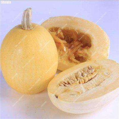 40pcs/sac exotiques Graines de citrouille japonaise délicieux Cucurbita fil d'or de citrouille Bonsai Plante en pot de légumes Livraison gratuite 3