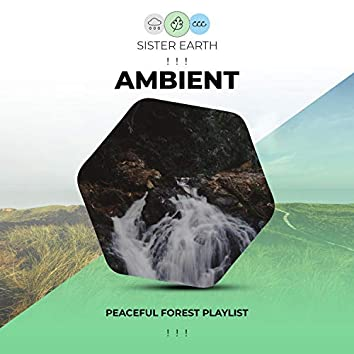 ! ! !  Peaceful Ambient Forest Playlist ! ! !