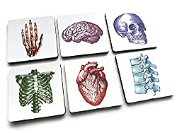 biology gifts for her - anatomy coasters