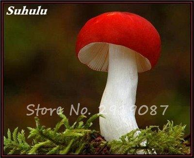 100 Pcs champignons colorés Graines Succlent plantes comestibles Ornamenta vert santé Graines de champignons de légumes pour Happy Farm 8