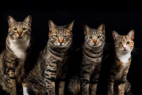 BJLBABY Rompecabezas Adultos 1000 Piezas Gato Animal Rompecabezas de Madera para Adultos Niños,Puzzle Desafiante para Niños y Adultos Regalo Juegos Educativos