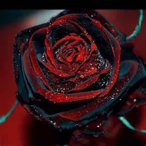 Bloom Green Co. 100 raras semillas de rosas Flor de rosa negra con borde rojo Flores de rosas raras...