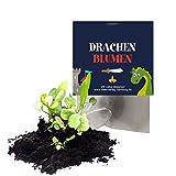 12x 'Drachen / Ritter' Samenbomben als Mitgebsel zum Kindergeburtstag / Ritterparty / Seedbombs / Partytüten / Mitgebseltüten / Geschenktüten / Blumen / Give-aways / Geburtstag / Kinder / Saatkugeln