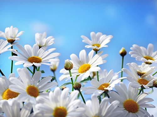 wandmotiv24 Fototapete weisse Blumen Größe: 350 x 260 cm Wandbild, Motivtapete, Vlietapete KTk52