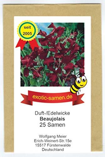 Edelwicke - Duftwicke - Bienenweide - Beaujolais - herrlicher Duft - bis 120 cm - 25 Samen