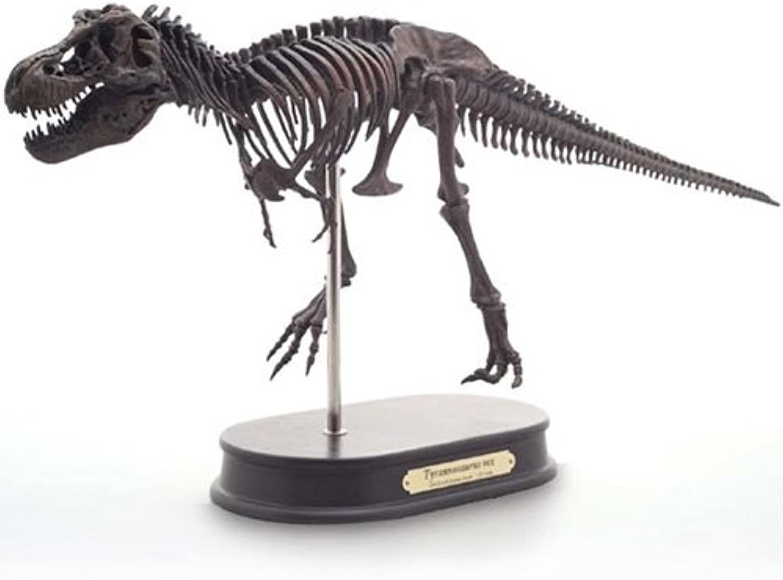 Tyrannosaurus - Skeleton Model