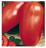 800 Aprox- Semillas de tomate en conserva - Lycopersicum Esculenthum en su embalaje original Made in Italy - Cajas de tomates