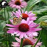 GEOPONICS Kaufen Echinacea Blumensamen 400pcs Samen Garten Echinacea Purpurea Blumen