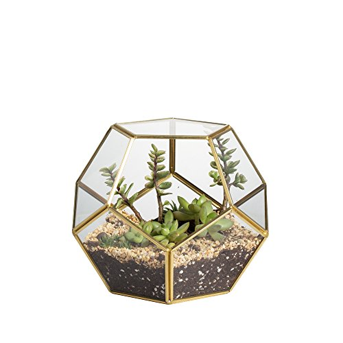 NCYP Brass Glass Geometric Terrarium, Home Tabletop Decor, Pentagon Regular Planter for Succulent Fern Moss Air Plants, Miniature Fairy Garden Container Gift (No Plants Included)