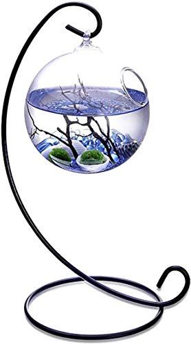Kit acquario da tavolo Mini Ecosystem Kit acquatico con 2 palline di muschio vivente Piccole pietre e ventaglio nero Ramo di corallo in terrario sospe