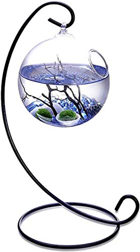 Kit de Acuario de Mesa Mini Ecosystem Aquatic Kit con 2 Bolas de Musgo vivientes Piedras pequeñas y Abanico Negro Rama de Coral en terrario de orbe Colgante de 3.5