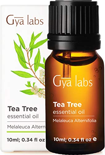 Gya Labs Tea Tree Essential Oil for Skin Care and Hair Care - Topical for Oily Skin, Dry Scalp, Healthy Nails - Diffuse to Purify Air -100 Pure Therapeutic Grade Tea Tree Oil for Hair - 10ml